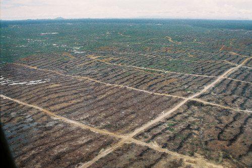 Huile de palme contre forêt tropicale : l'enjeu du contrôle des exploitations